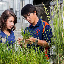 Crop Genetics and Breeding for Master Full Scholarship