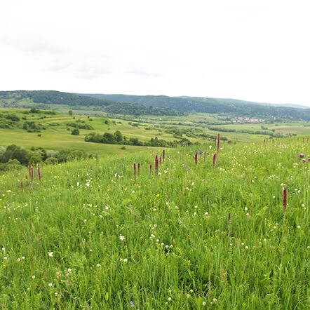 Grassland Biodiversity for Master Full Scholarship