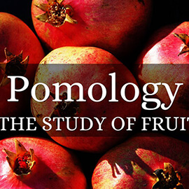 Pomology-PHD Full Scholarship