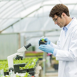 Crop Genetics and Breeding for PHD Full Scholarship