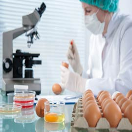 Food Science & Engineering -Master Scholarship in Zhenjiang