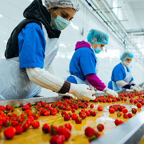 Food Processing and Safety-Master Full Scholarship