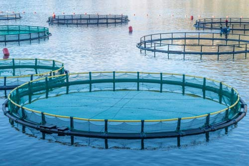 aquaculture-food.jpg